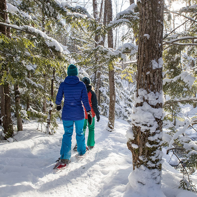 Snowshoe trail on Grand Mesa